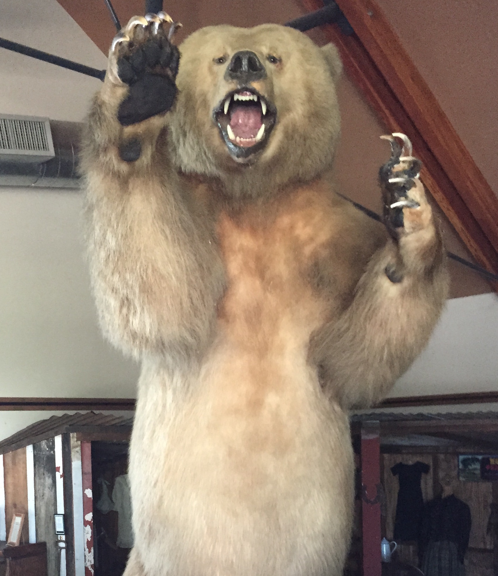 Grizzly Bear – Valley Center History Museum