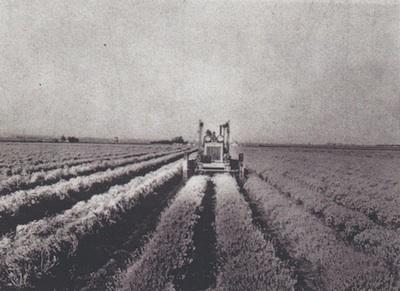 Rubber-Plantation-web